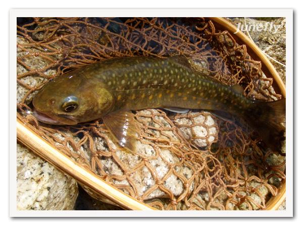 Facefish_B120526.jpg
