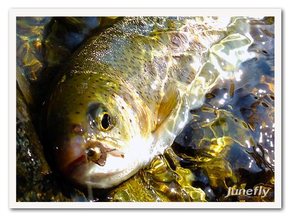 Facefish_B130225.jpg