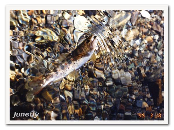 Facefish_B130301.jpg