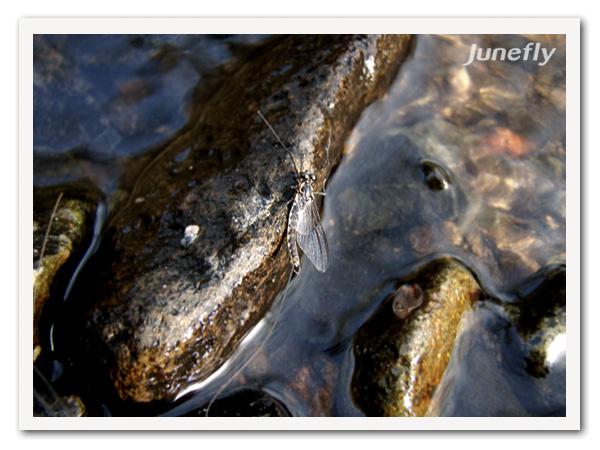 Facefish_B150418b.jpg