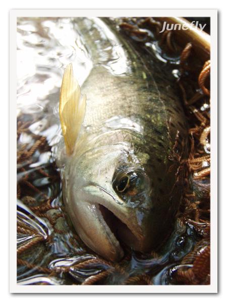 Facefish_C0604c.jpg