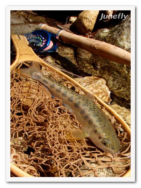 Facefish_C130405b.jpg