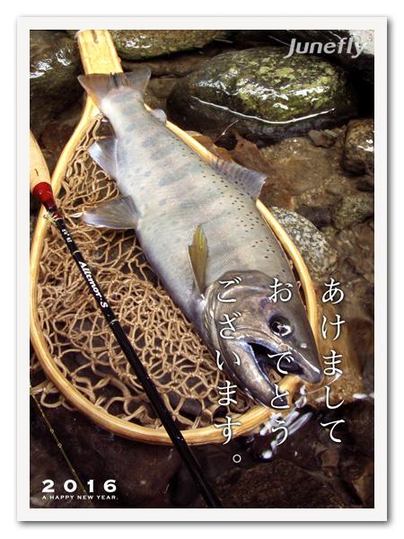 Facefish_C160101.jpg