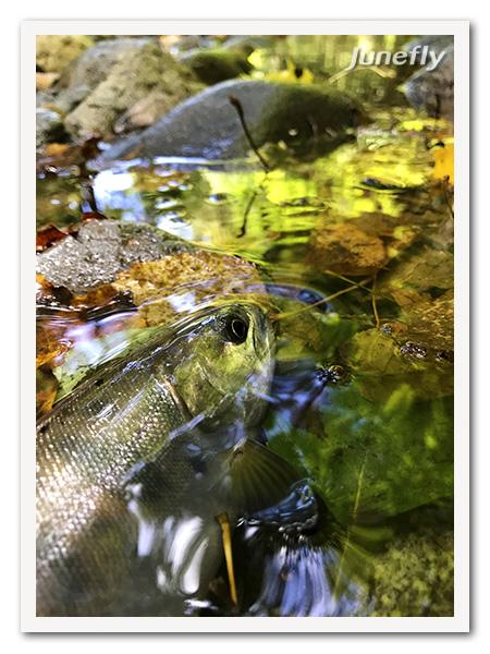 Facefish_C190908b.jpg