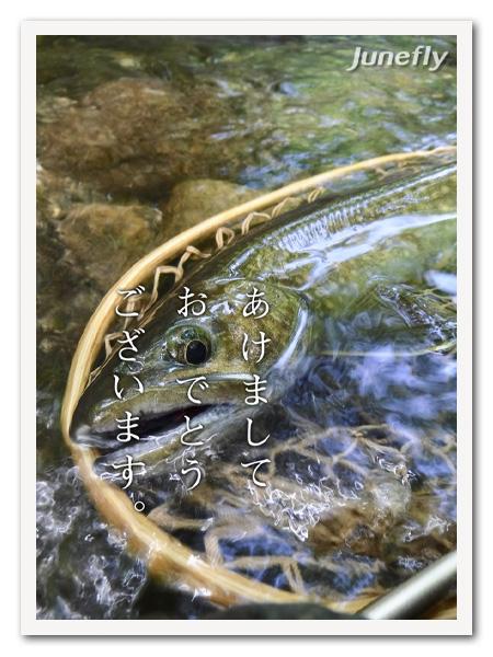 Facefish_C201901.jpg